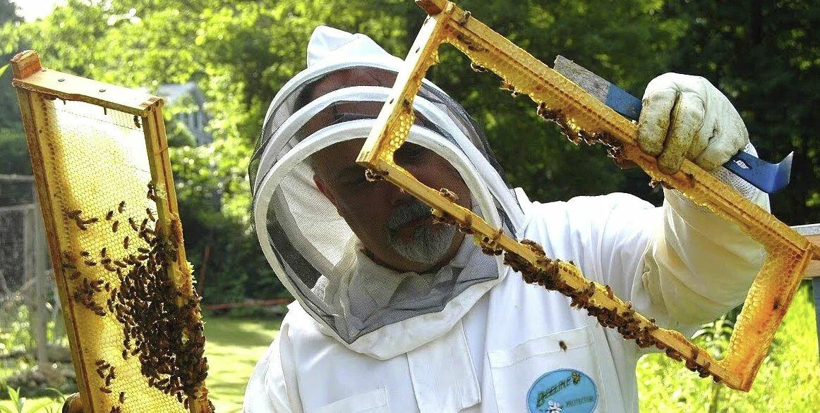 Осмотр пчел. Фото