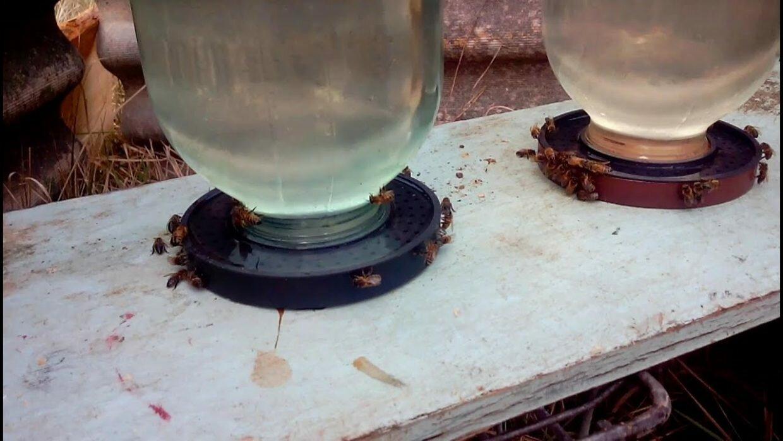 Поилка для пчел своими руками. Фото