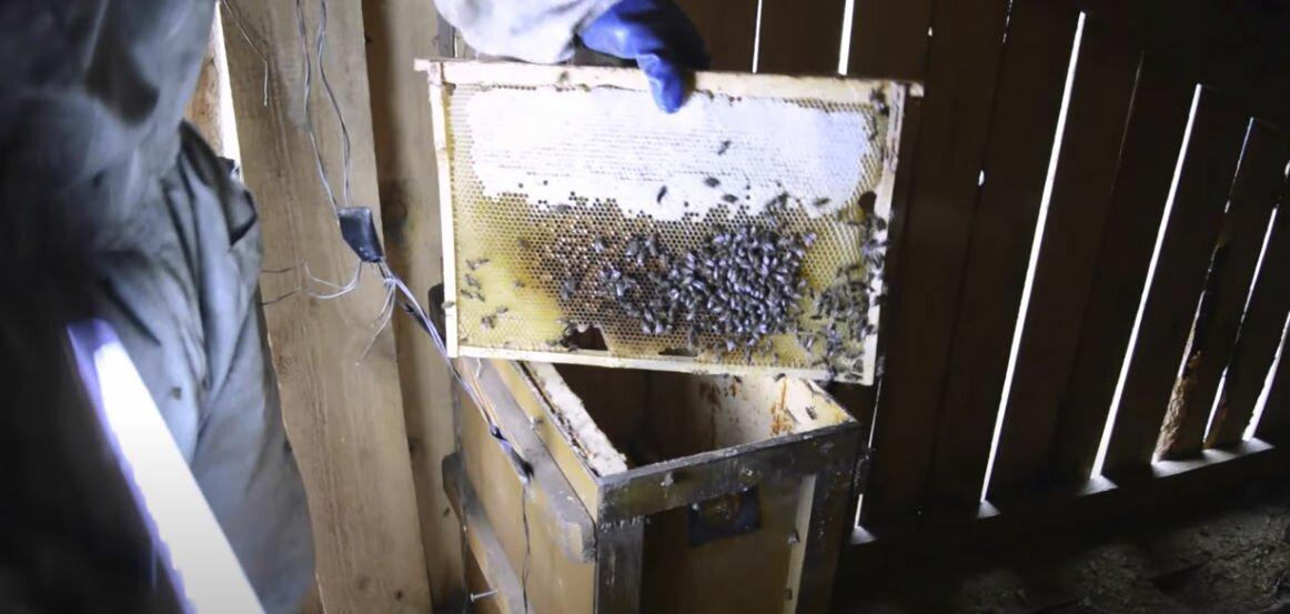 ловушка для пчел