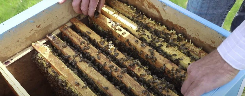 Отводка пчел весной