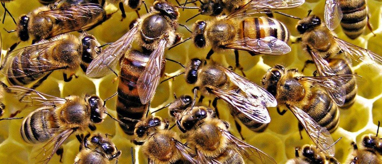 избавиться от пчел